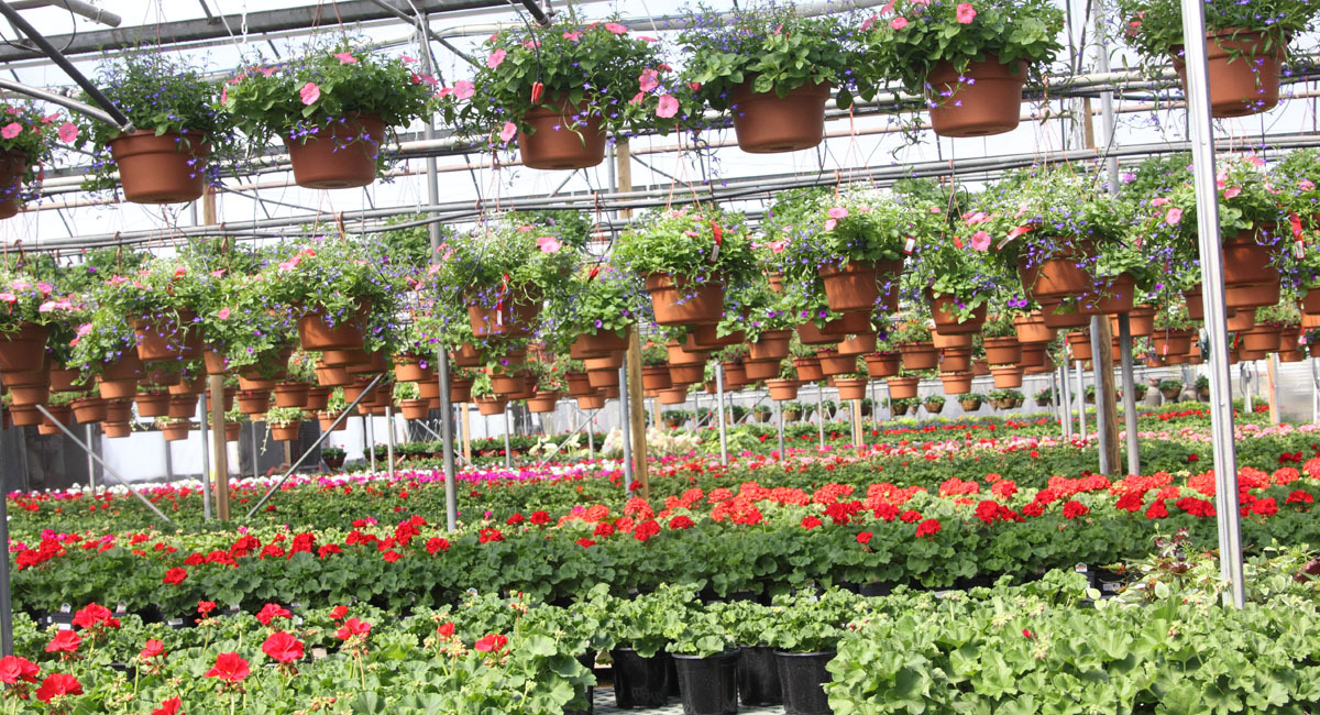 productiongreenhouse
