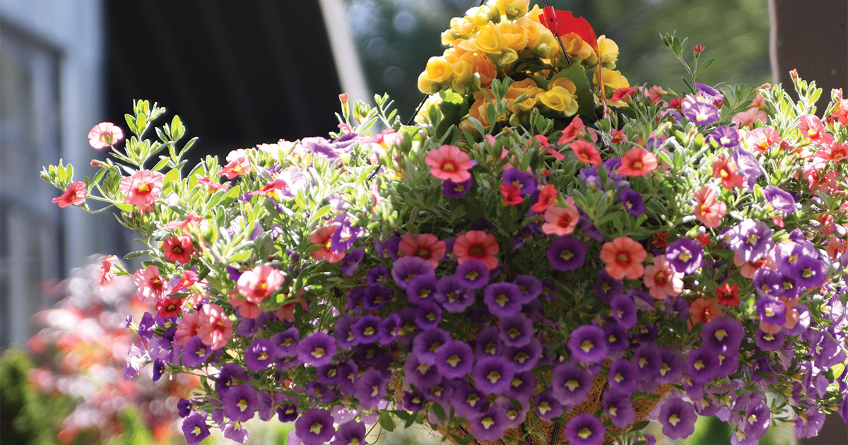 How To Keep Your Containers Looking Fantastic Prairie Gardens