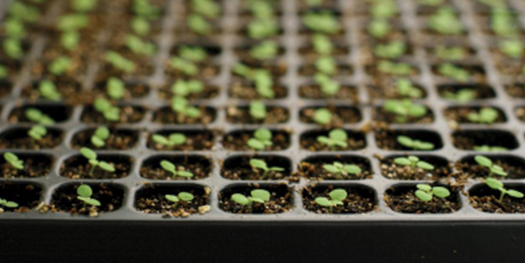 Seed Starting 101 Prairie Gardens Jeffrey Alans