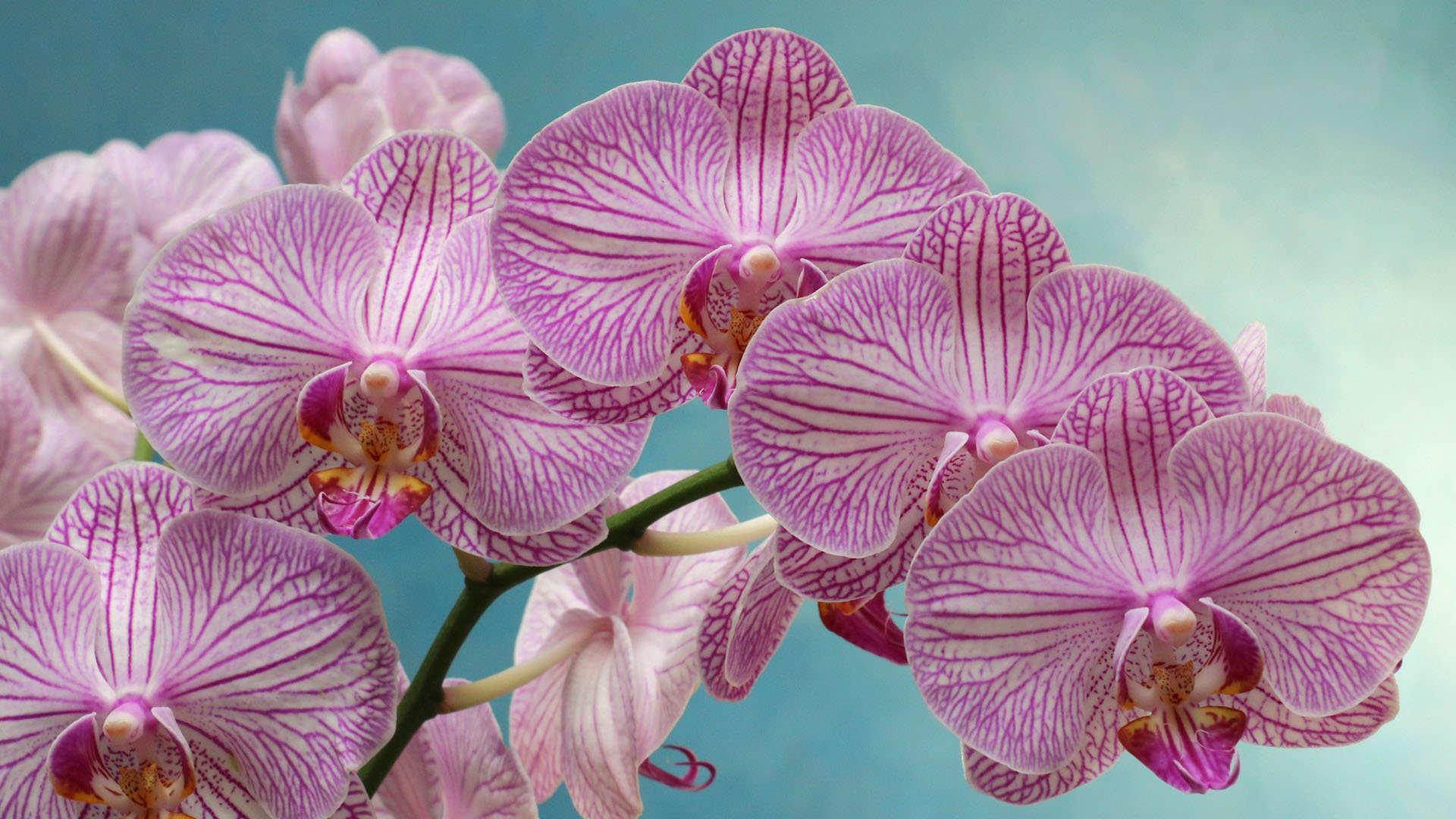 How To Care For Orchids Prairie Gardens Jeffrey Alans