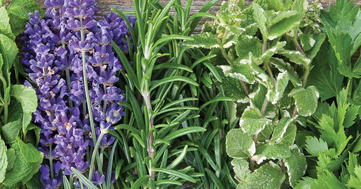 2019 Herb Variety List | Prairie Gardens & Jeffrey Alans