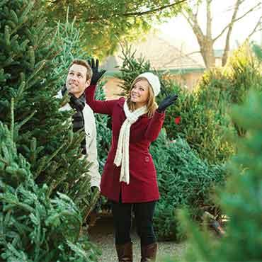 PG Fresh Christmas