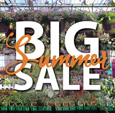 Summer Greenhouse Markdowns